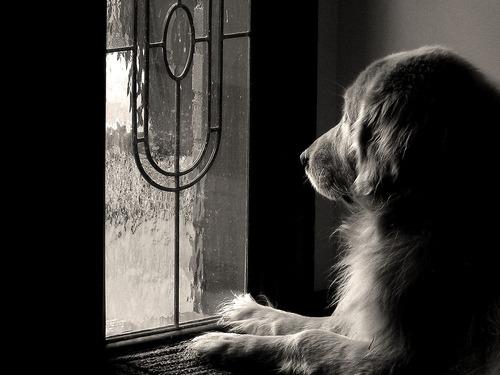 natal-cão