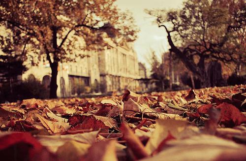 outono-som-dos-sentimentos-um-ano-inesquecivel-babi-dewet