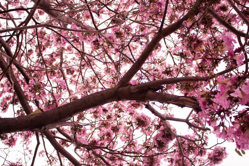 flores-primavera-belo-horizonte