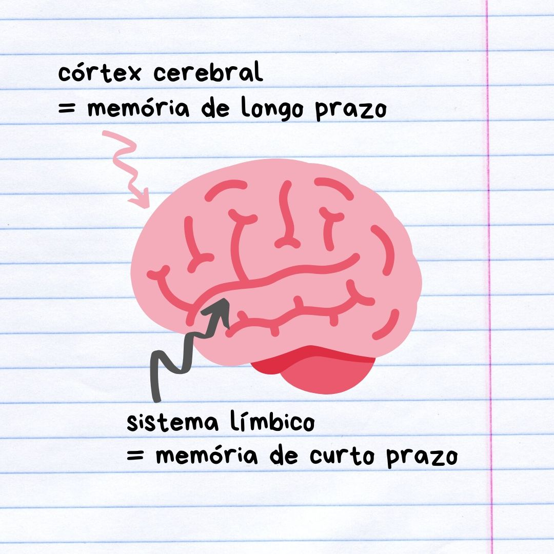 como aprendemos cerebro cortex central sistema limbico diario da aninha